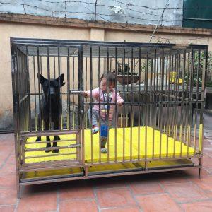 chuồng cho chó becgie 50 - 70 kg
