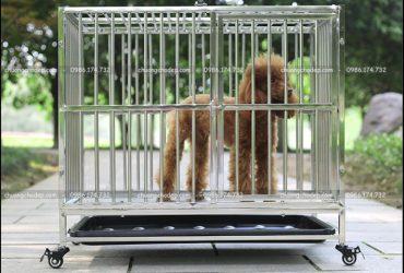 kích thước chuồng chó 10kg