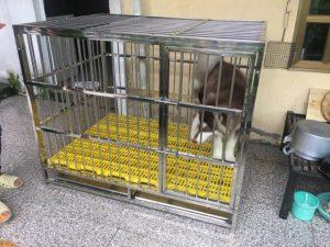 bán chuồng chó husky