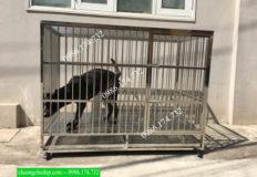 chuồng chó inox tại Biên Hòa