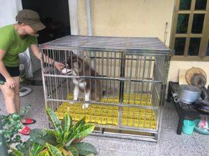 chuồng nuôi chó Alaska
