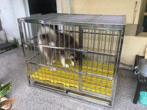 chuồng nuôi chó husky