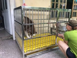 kích thước chuồng nuôi chó husky