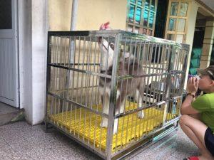 kích thước chuồng nuôi chó Samoyed