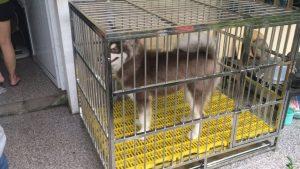 kích thước chuồng nuôi chó Alaska