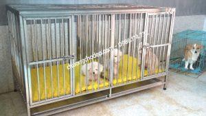 mua chuồng chó cũ ở hà nội