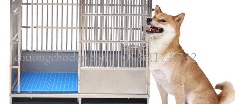 Top 8 lý do chuồng chó inox được sử dụng nhiều nhất