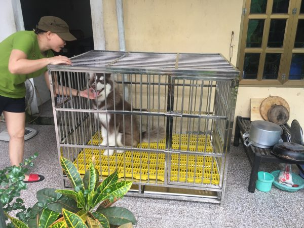 Chuồng chó chuyên dụng