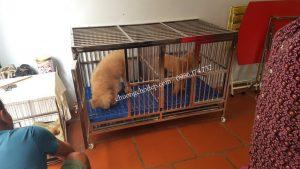 chuồng nuôi chó poodle