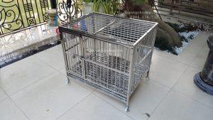 lắp chuồng chó tại sân
