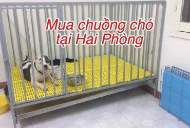 dia-chi-mua-chuong-cho-tai-hai-phong