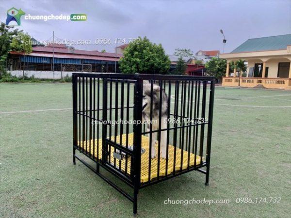 chuong cho sat S115 14