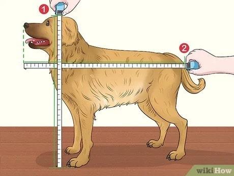 đo chó